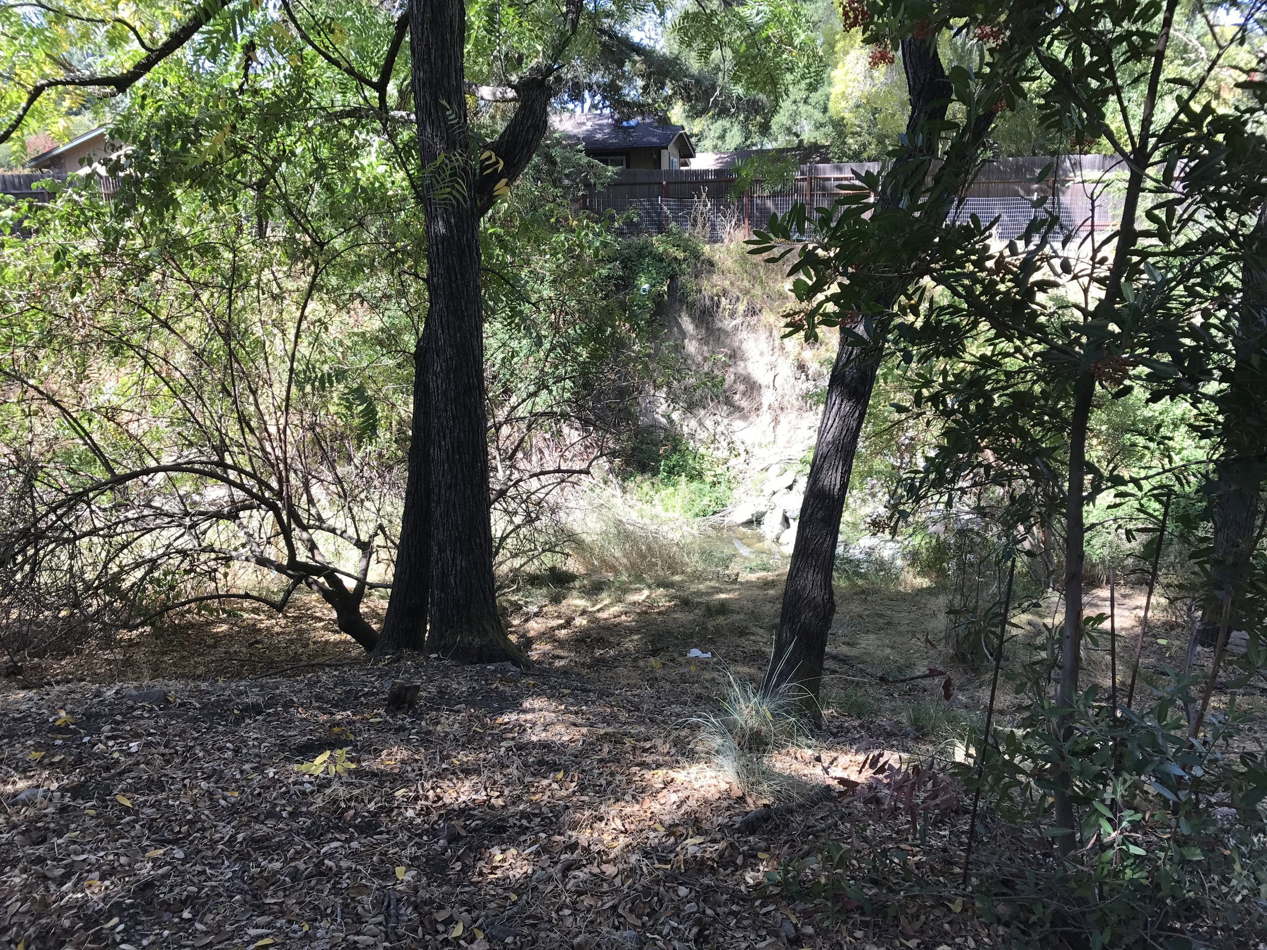 Riparian area near Las Trampas Creek in Leigh Creekside Park