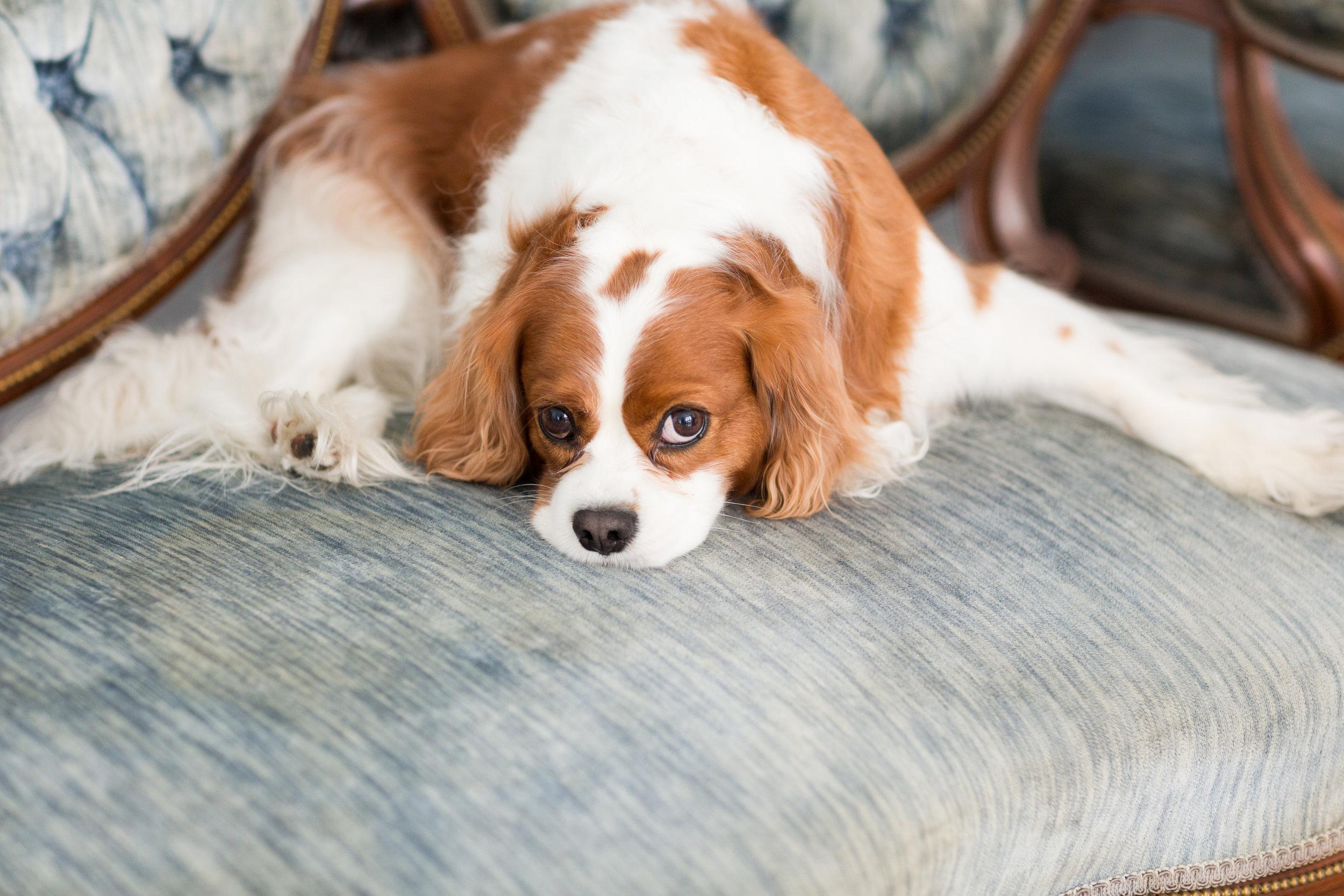 dogfriendlyweddingvenue