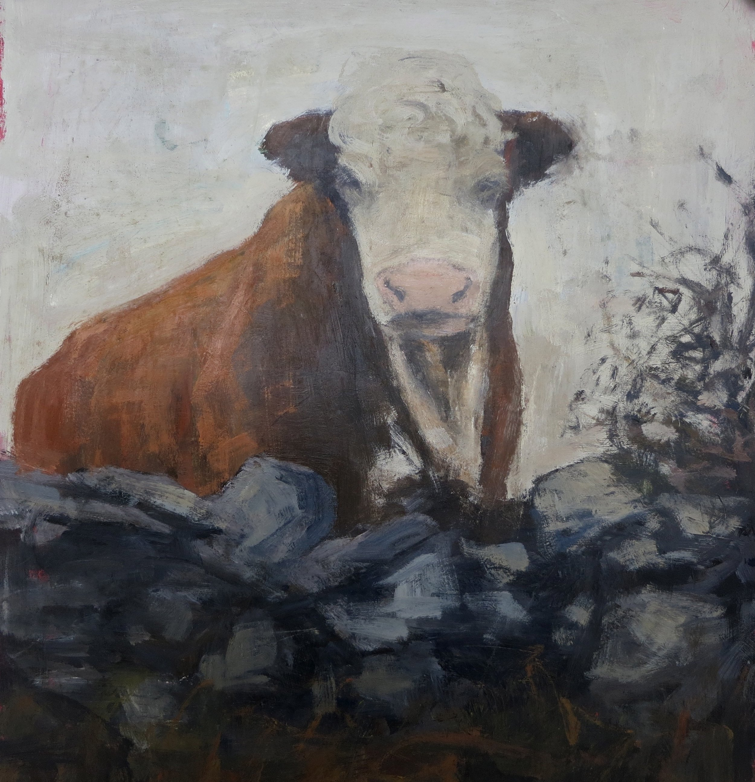 Burren Bull (sold)