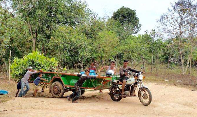 Transporting Mango Trees To A School