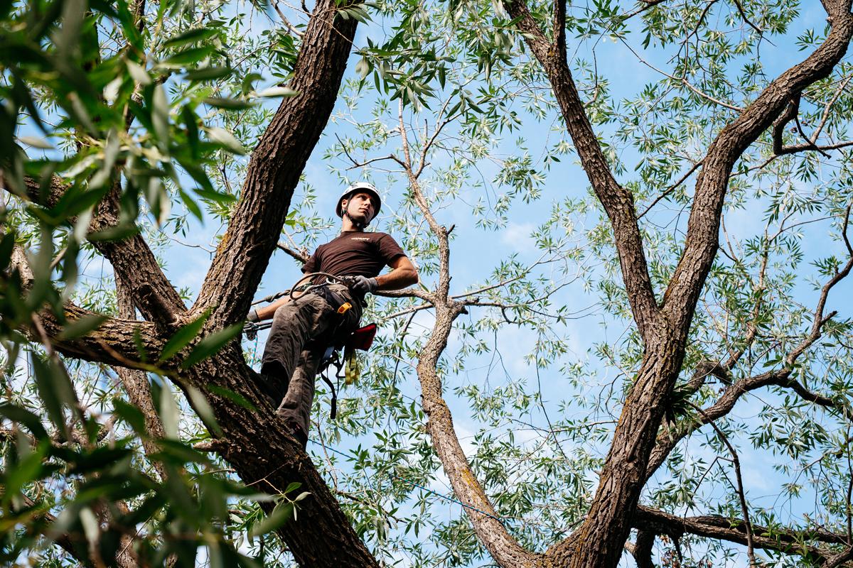 TreeClimbing_-Lifestyle-Photographer-Avenue-Edmonton-MG_9988cam1.jpg