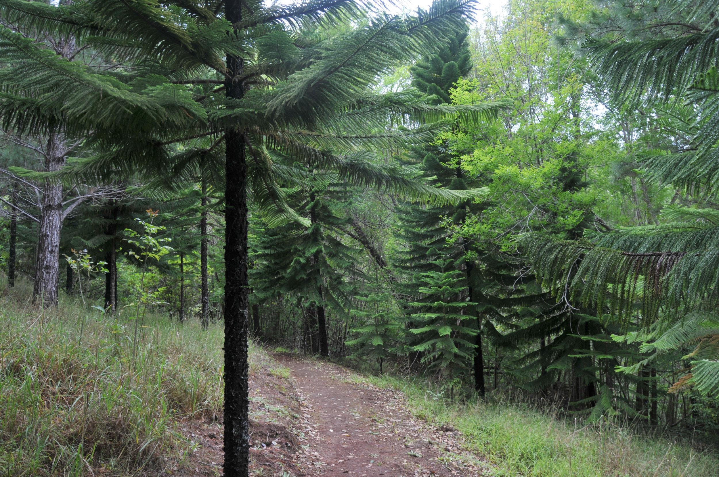 Kapahakapao East Loop Trail