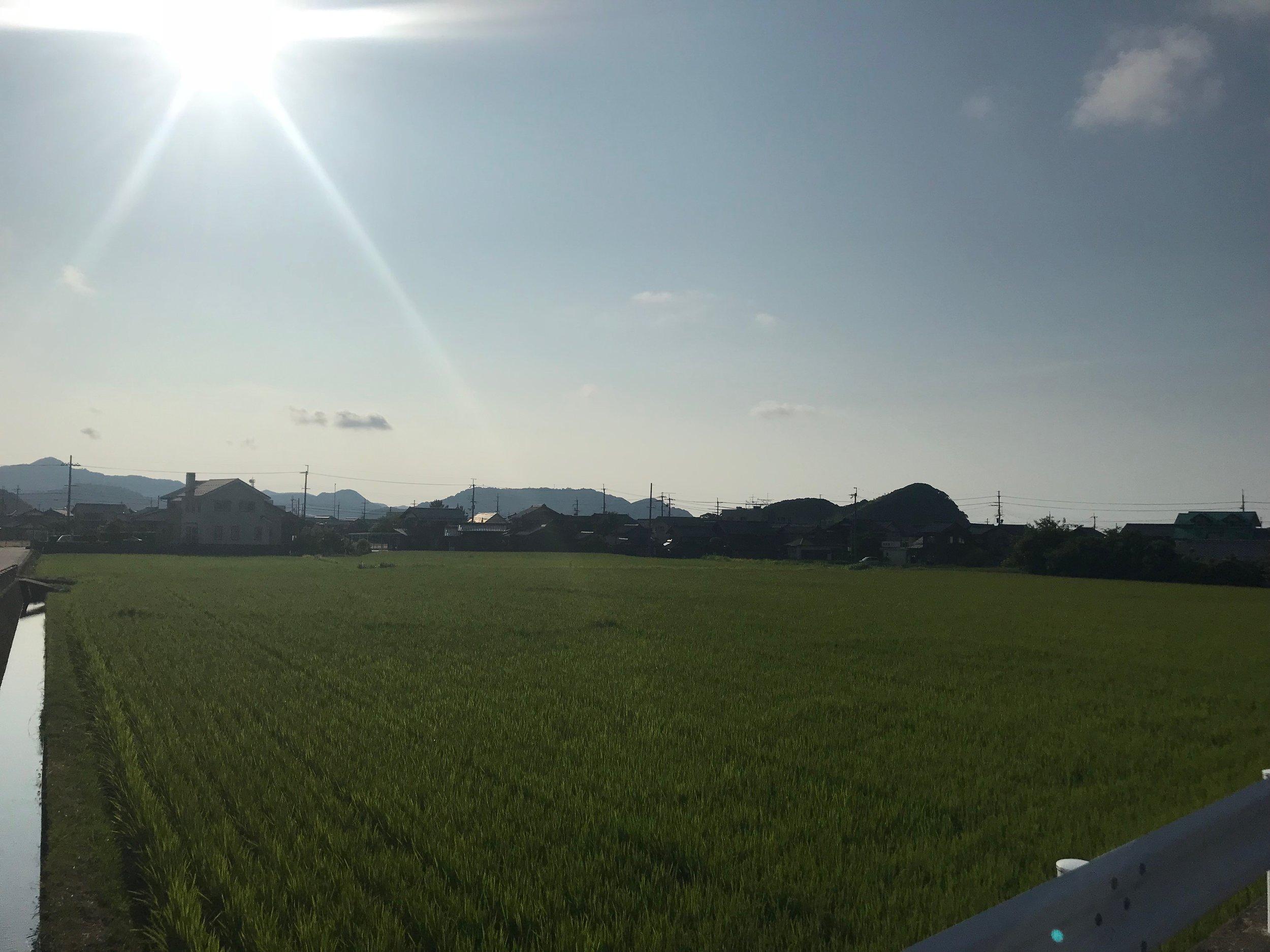 IMG-8378.JPG