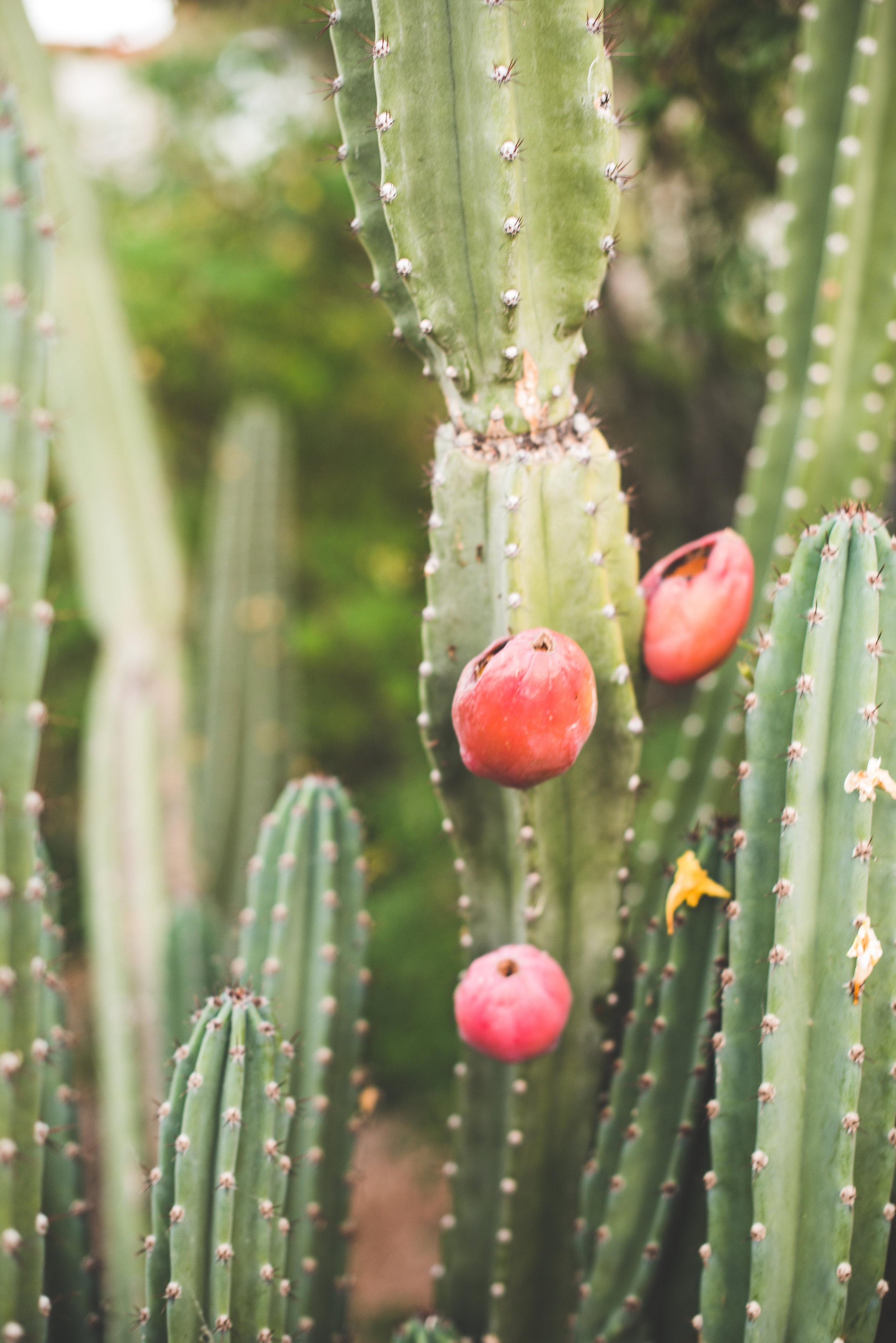 Cacti.2017-5.jpg