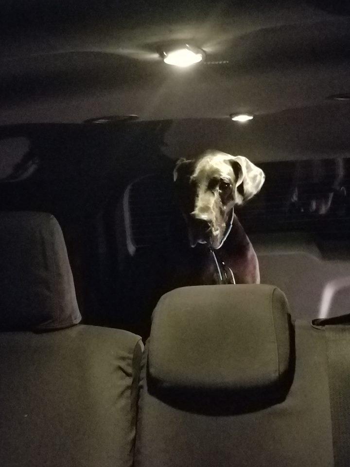 Louisa in Amber's truck.
