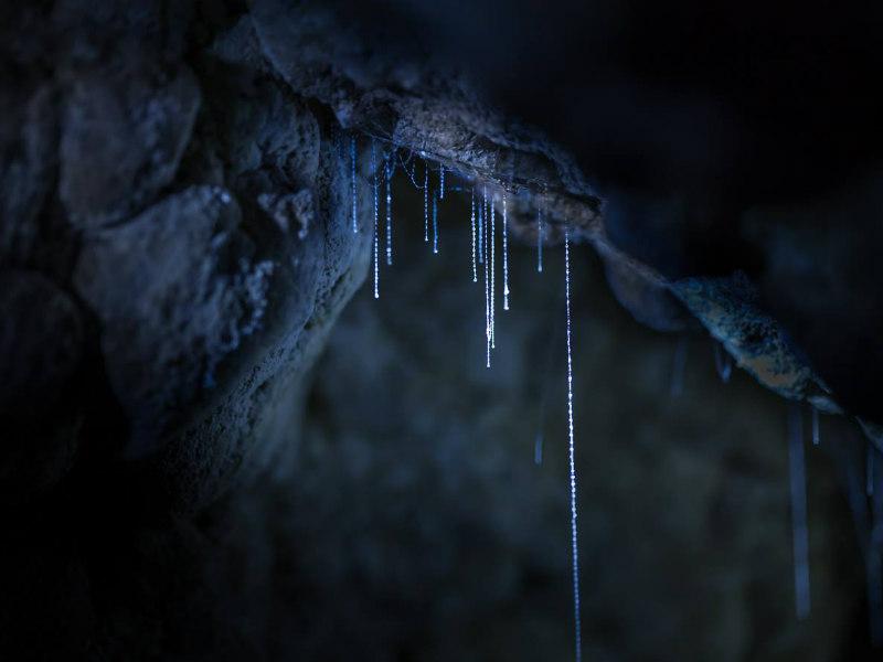 Image Credit: Kawiti Glow Worm Caves
