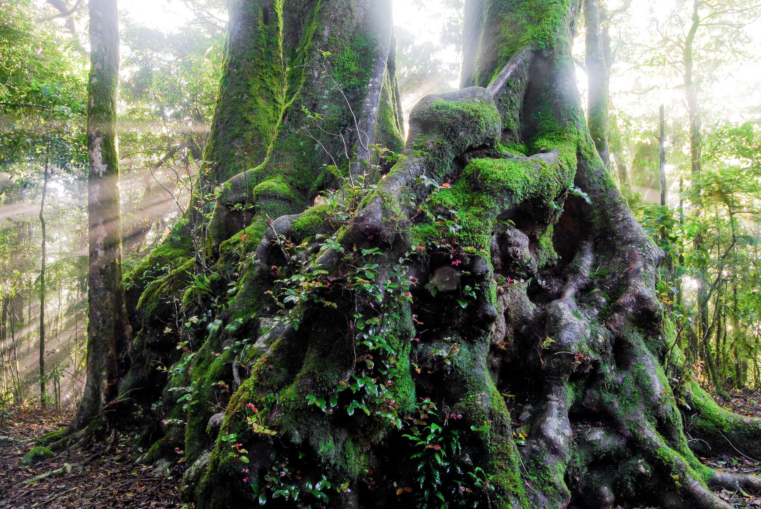 Rainforest Beach Tree 2-2-3.jpg