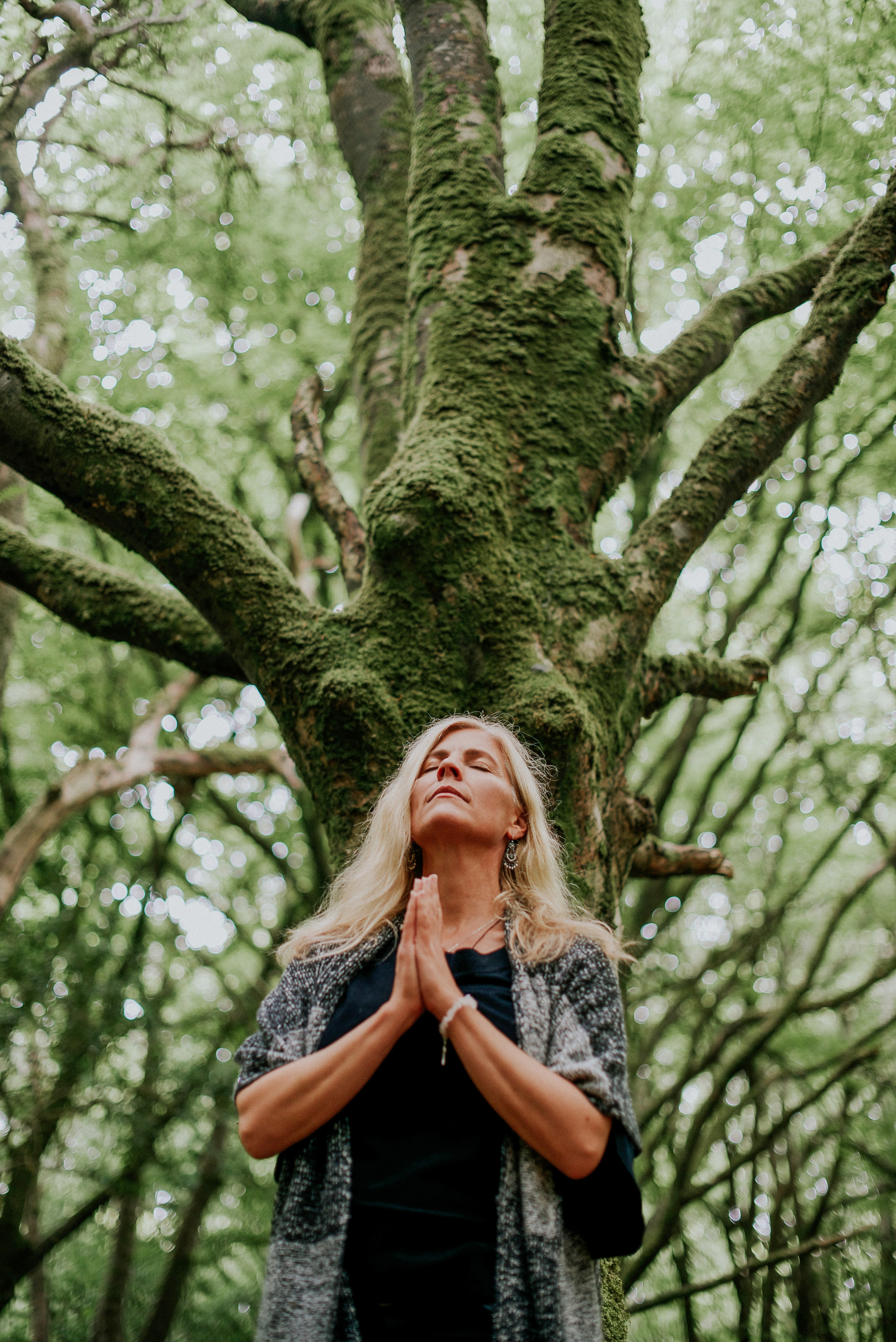 The Goddess Tree, my oracle and guide. Barna Woods, Galway (photo, Saibh Egan)