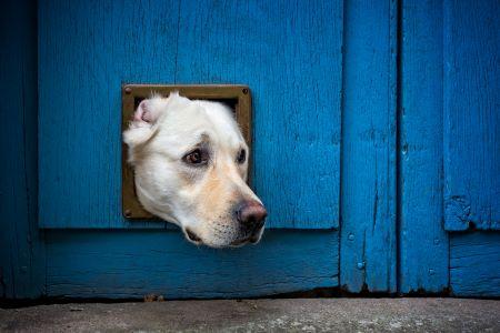 dog stuck in door.jpeg