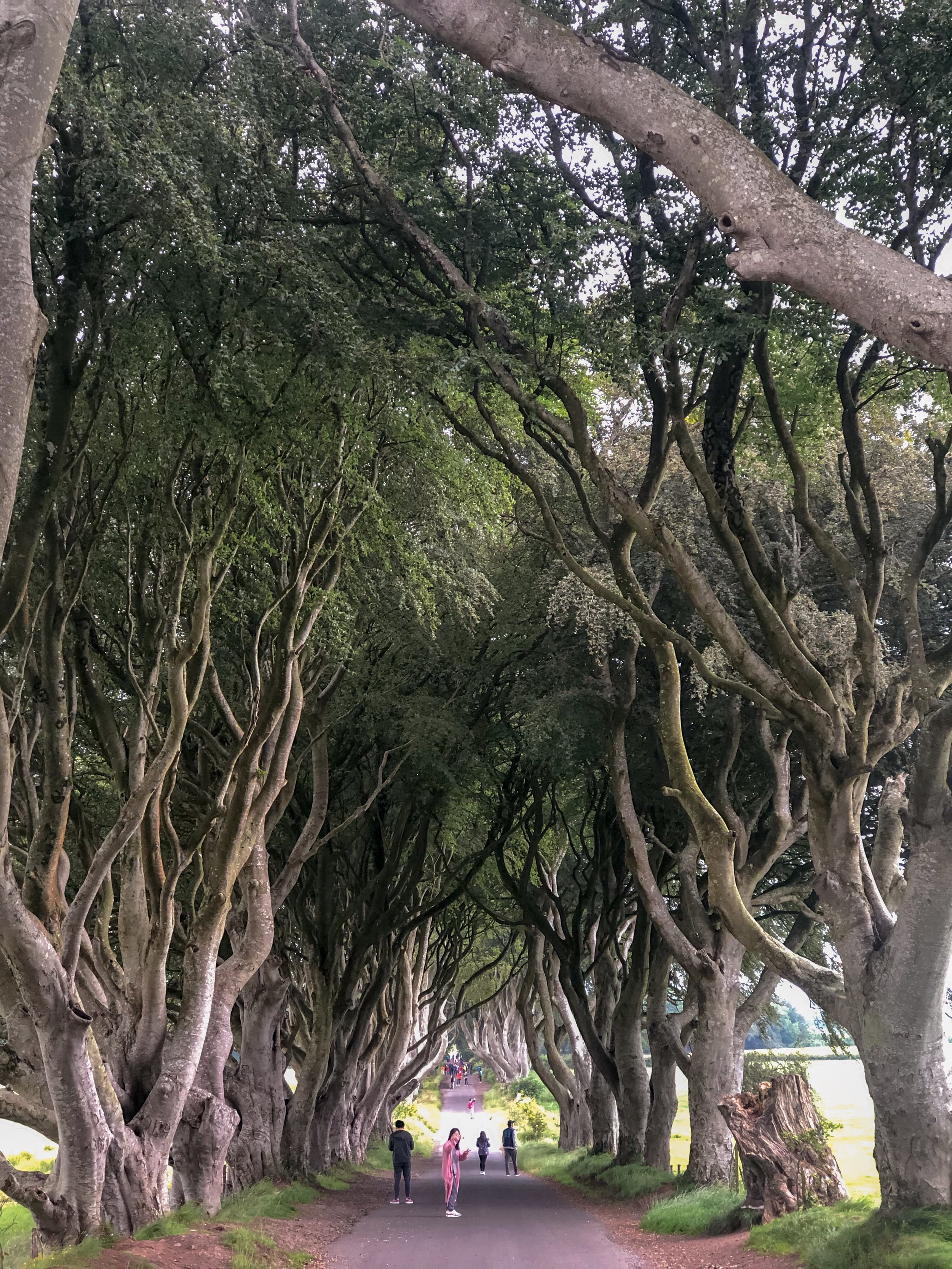 The Dark Hedges from GoT.