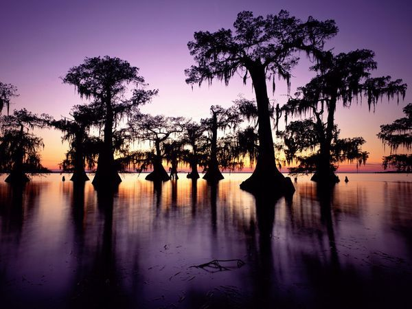 bayou-tree.jpg