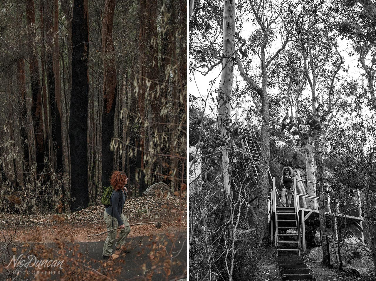 Walking through burnt forest in the Australian bush after a bushfire