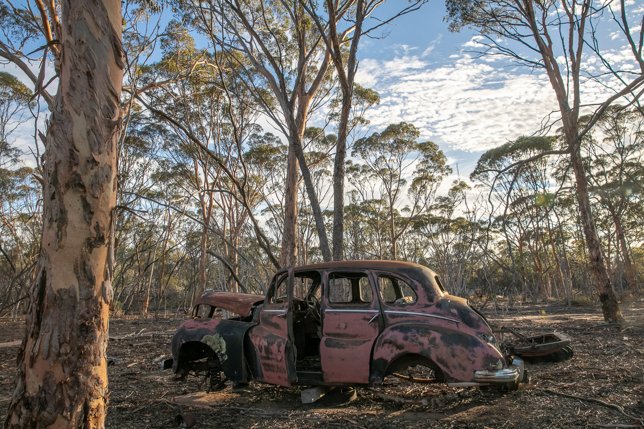 Rusty old car in the salmon gums in the wheatbelt town of Lake Grace in Western Australian