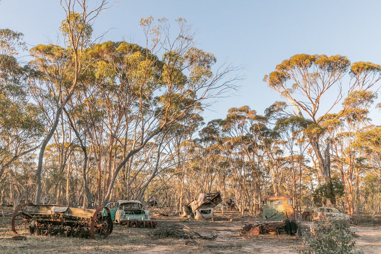 Abandoned vehicles in the Australian bush with salmon gums