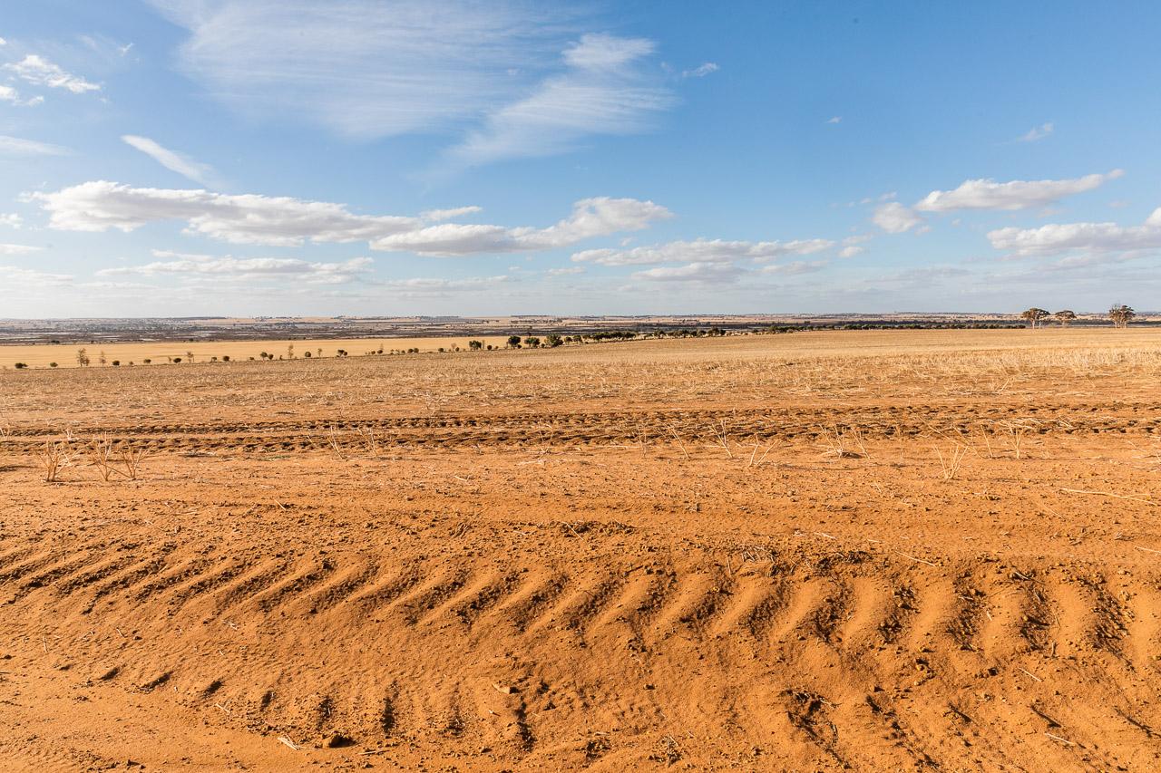 Stubble in the wheatbelt, Bruce Rock