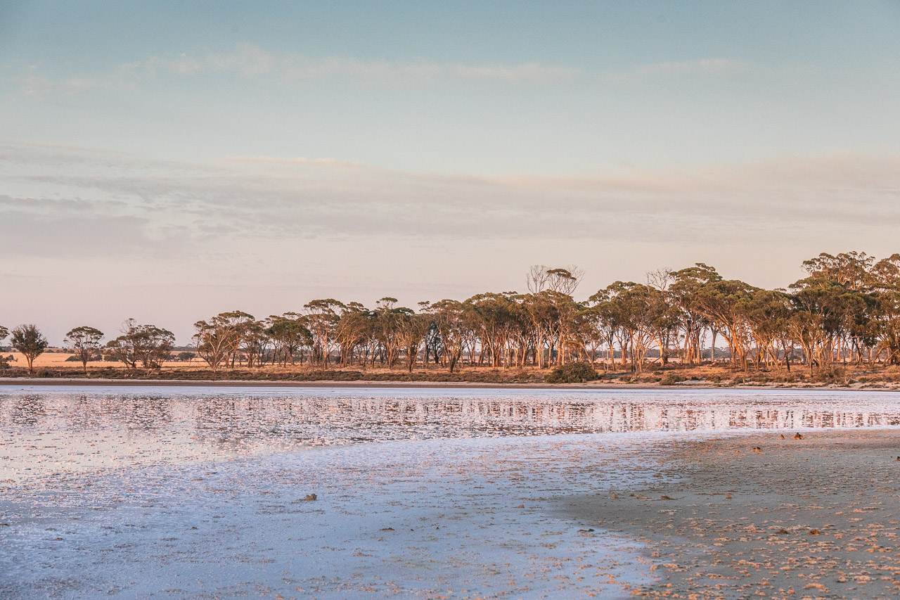 Salt lake and salmon gums glowing at sunrise