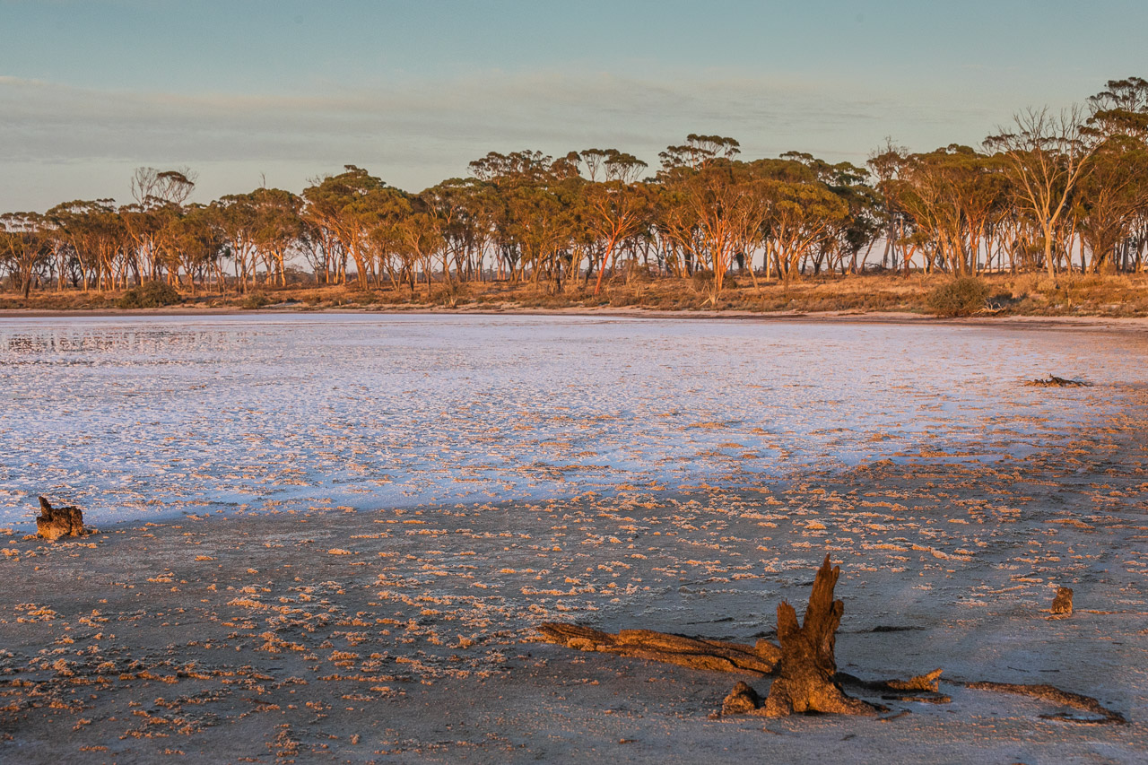 Salt lake and salmon gums glowing as the sun rises over the wheatbelt farm