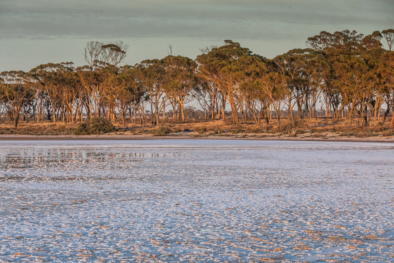 Salmon gums and salt lake at sunrise in Bruce Rock