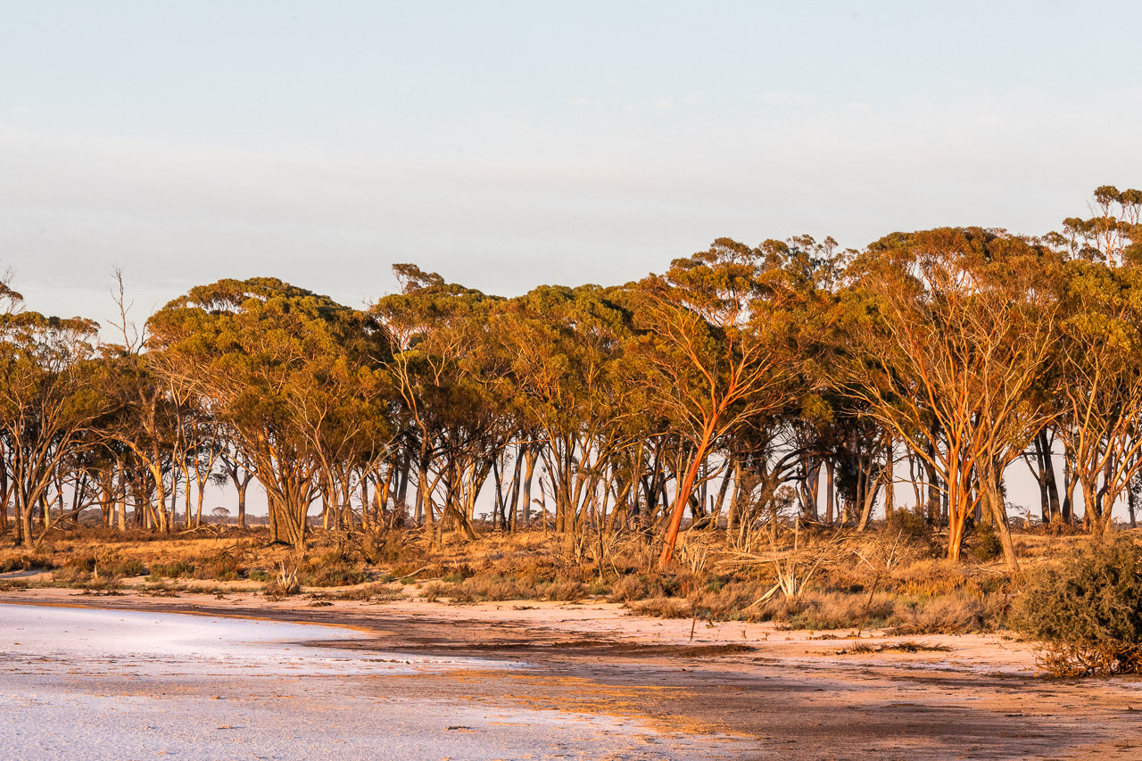Salt lake and salmon gums in Bruce Rock in Western Australia