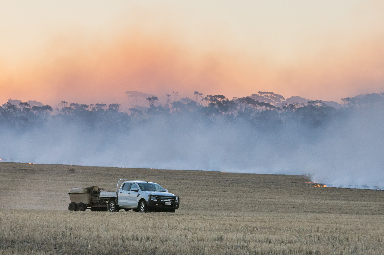 The fires are set by the farmer in his ute for Windrow Burning in WA's wheatbelt region