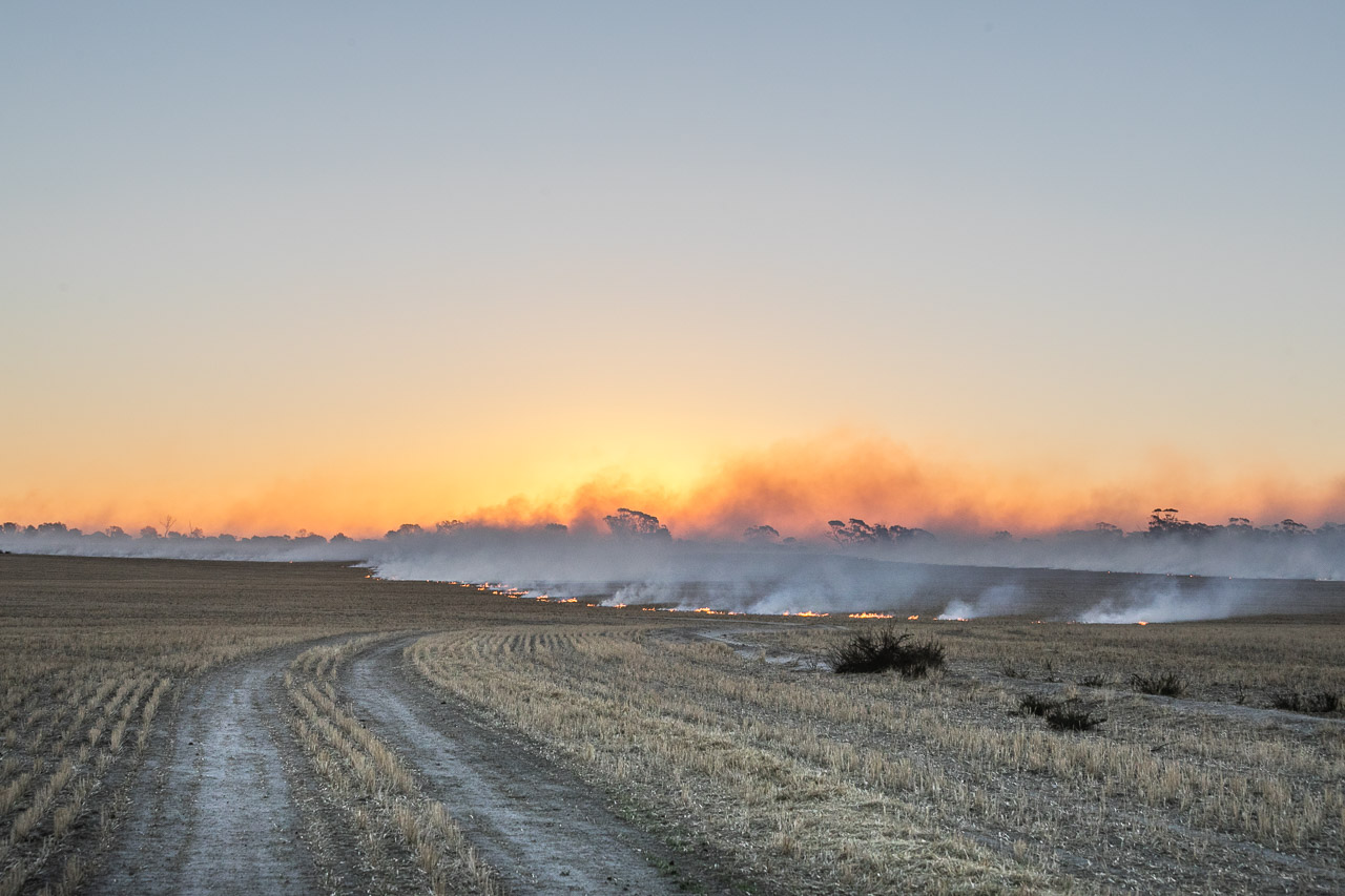 Broad acre farming preparations for seeding with windrow burning in the wheatbelt, WA