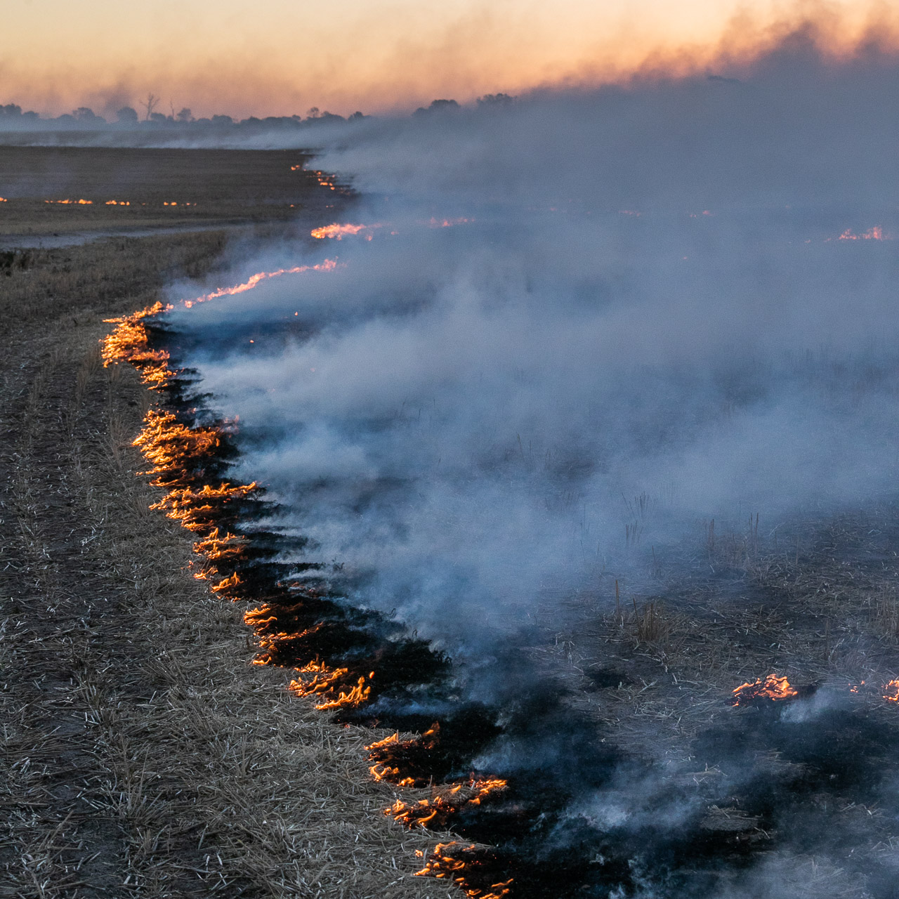 Smoke and fire at sunset during windrow burning in the Wheatbelt