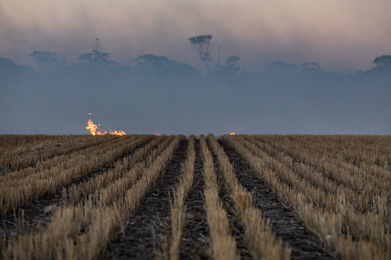 Windrows and fire in the wheatbelt during burning prior to seeding