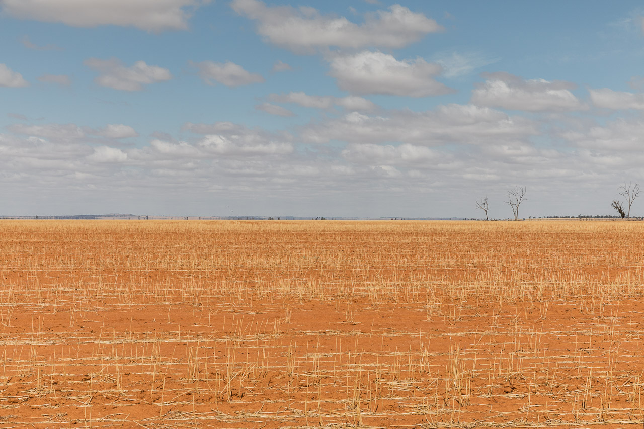 Wide open space - flat horizons equal big skies and minimalist landscapes in the Wheatbelt
