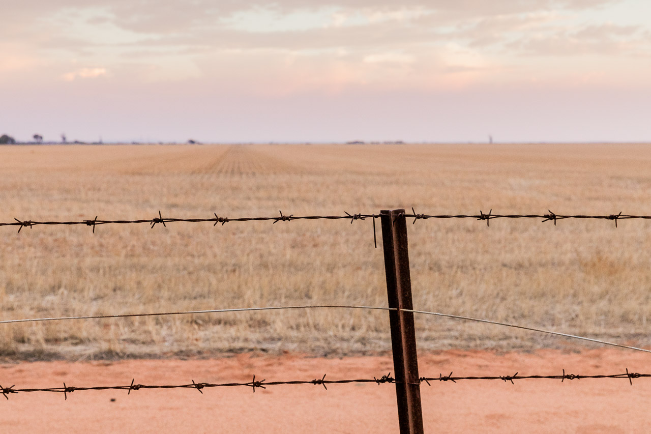 Wheatbelt with barbed wire fence and grain stubble