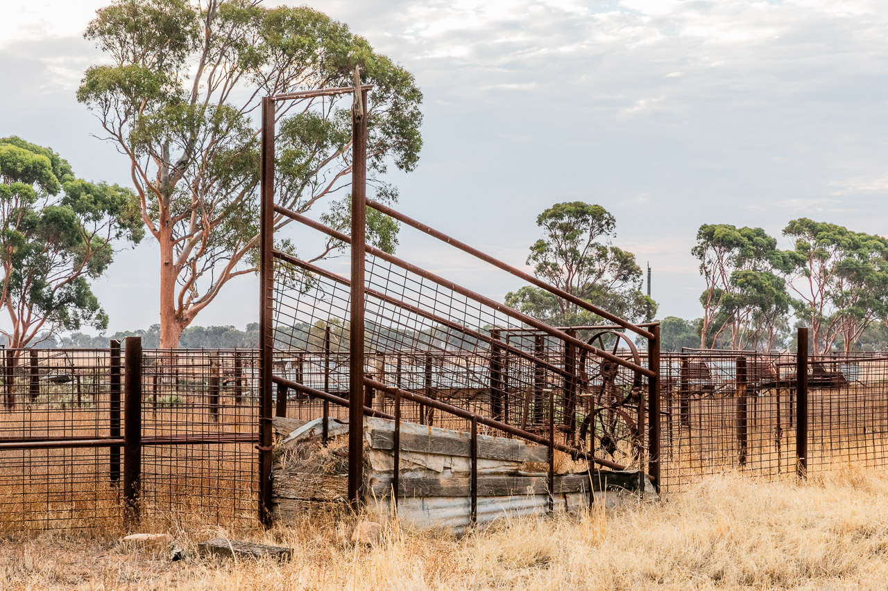 Rusting sheep and cattle yards in the Wheatbelt