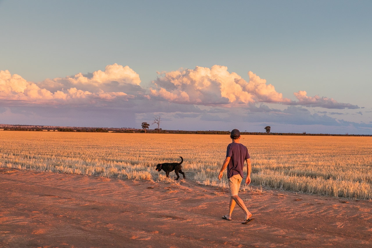Man walking his dog, grain stubble and storm clouds at sunset in the Wheatbelt