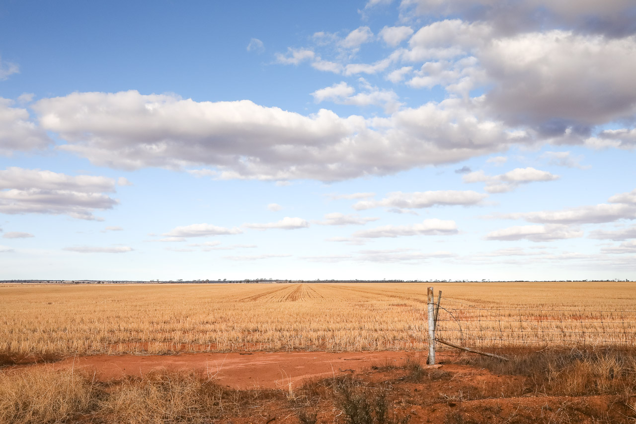 Beautiful light and clouds over the grain paddock in WA's wheatbelt