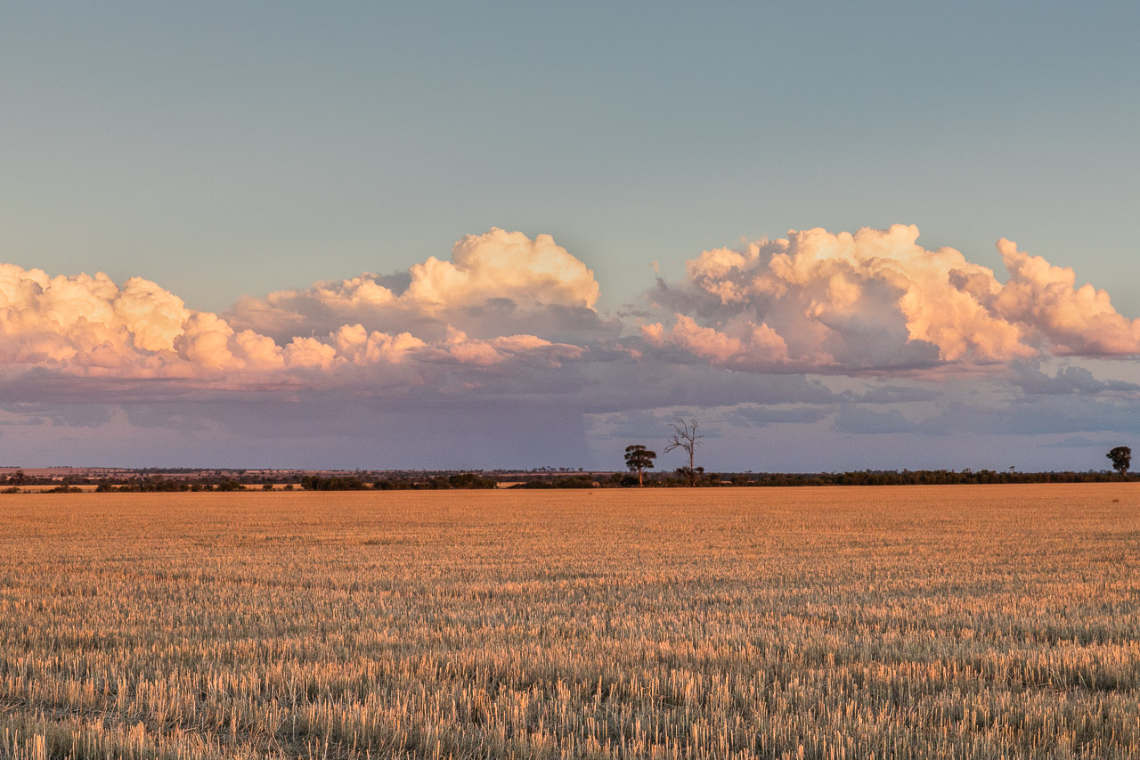Grain stubble and storm clouds at sunset in the Wheatbelt