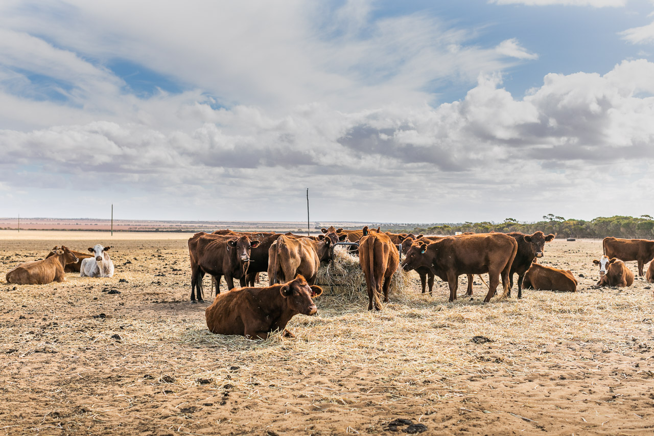 Broadacre grain farm in Goodlands, near Kalannie, also running a few cattle