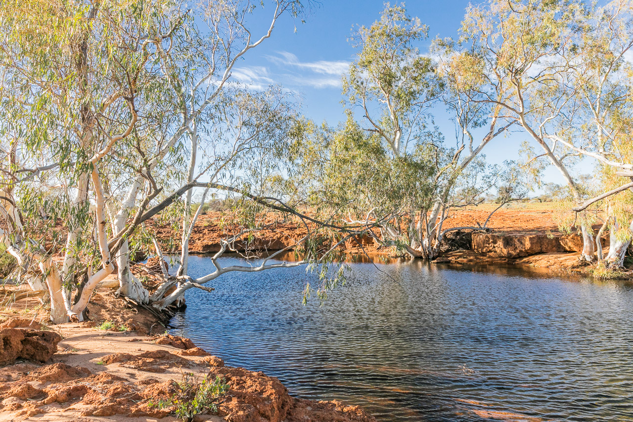 One of several waterholes for cooling off at Carey Downs Station