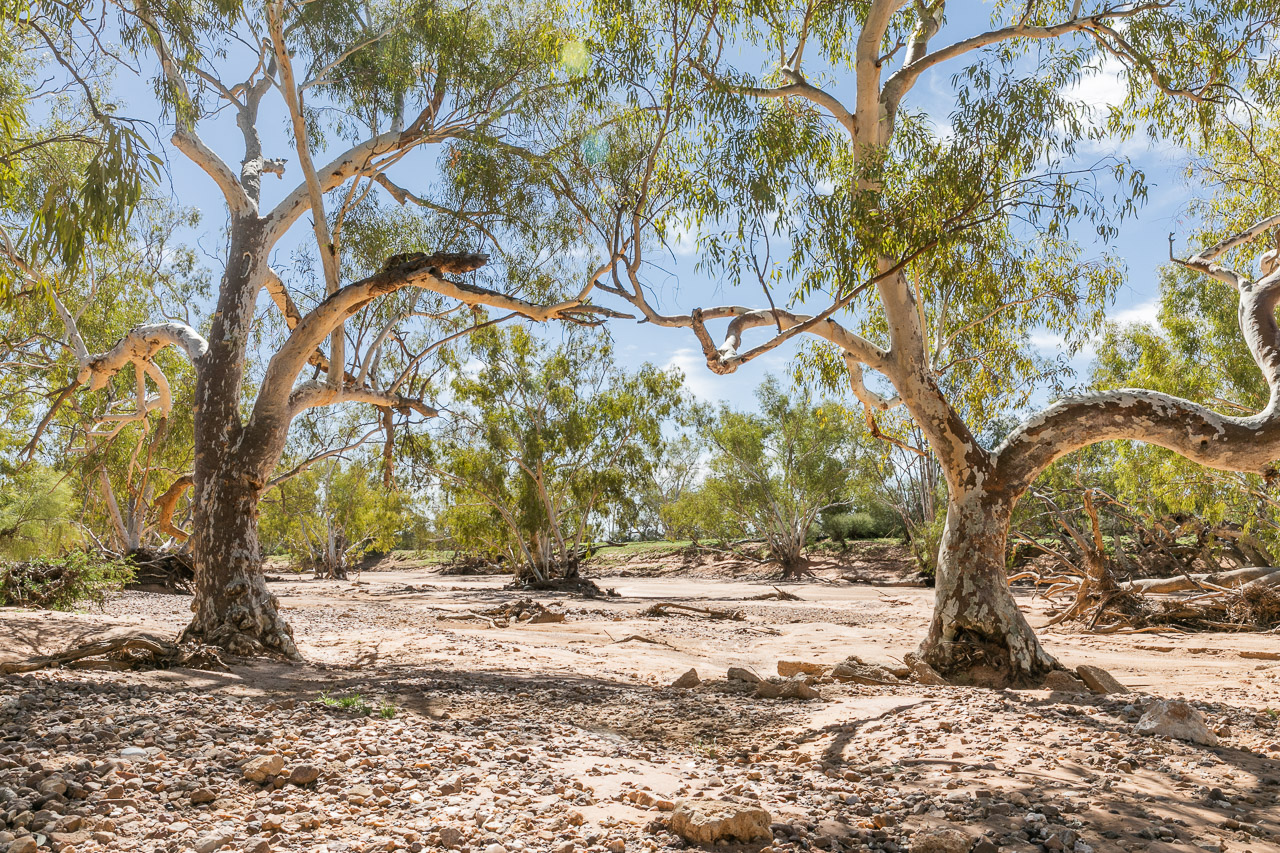 The dry Wooramel River bed at Carey Downs Station
