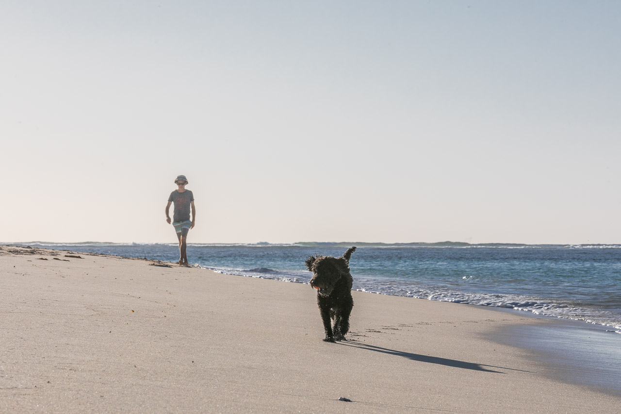 Man and dog on the beach