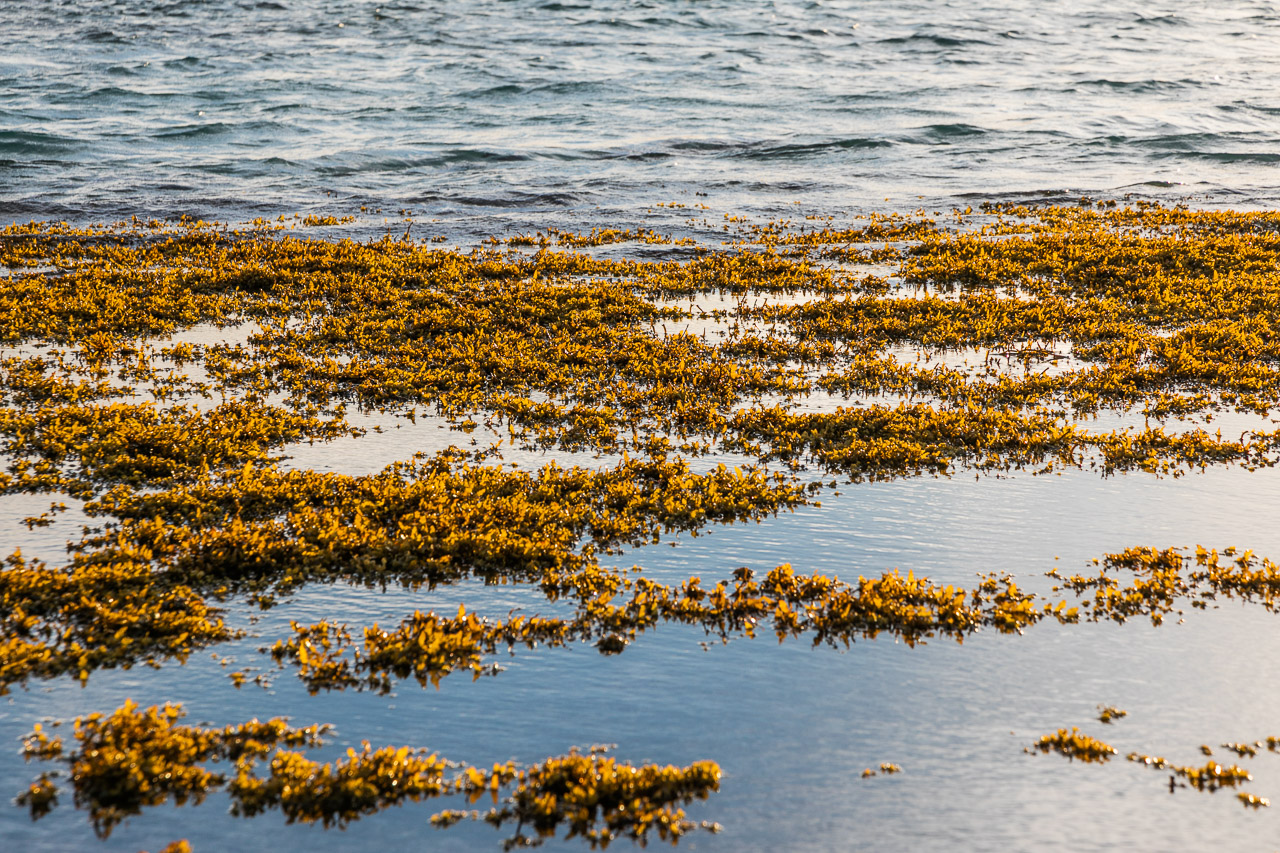 Seaweed and calm water