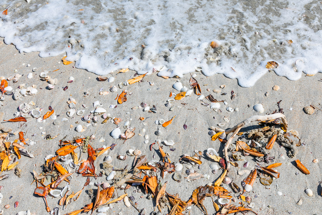 Leaves and shells on the shoreline