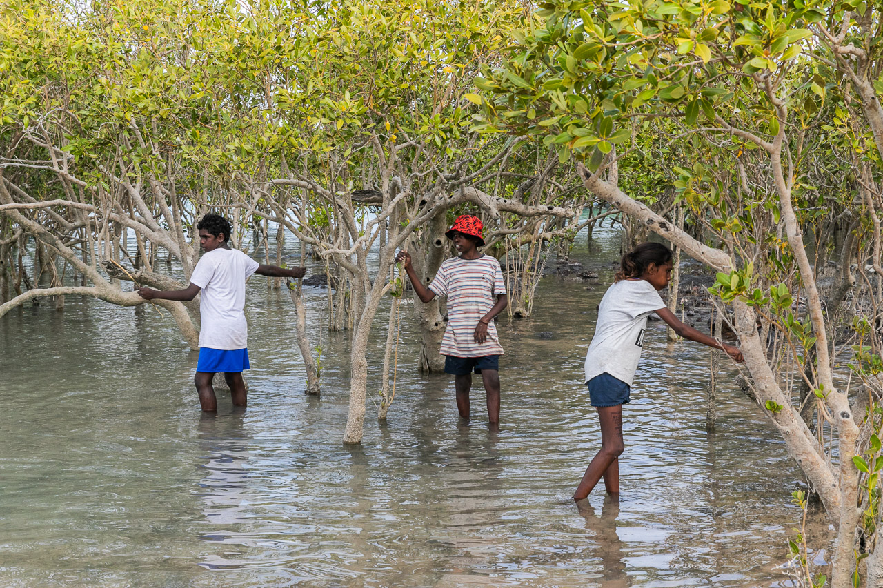 Indigenous kids looking for hermit crabs in the mangroves in Broome