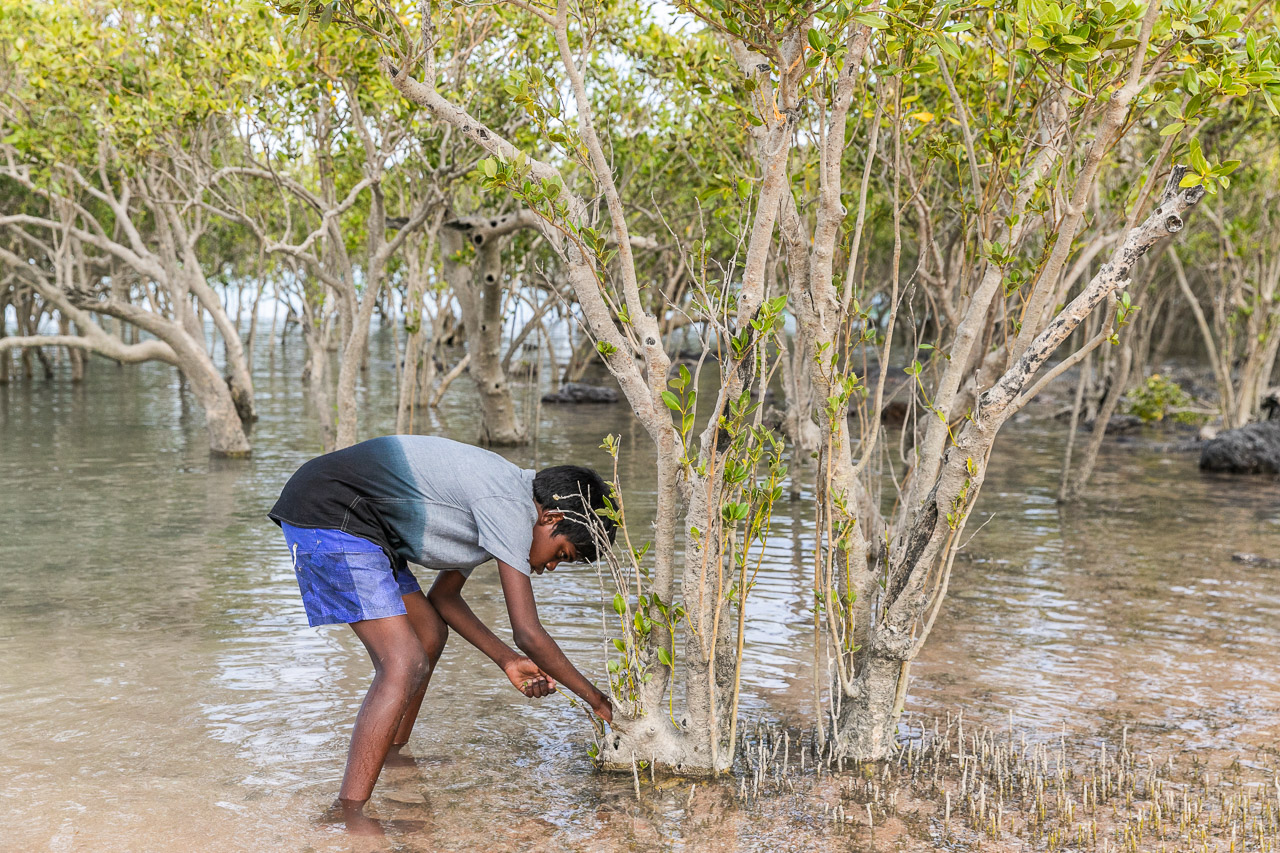 Looking for hermit crabs in the roots of a mangrove tree in Roebuck Bay, Broome, WA