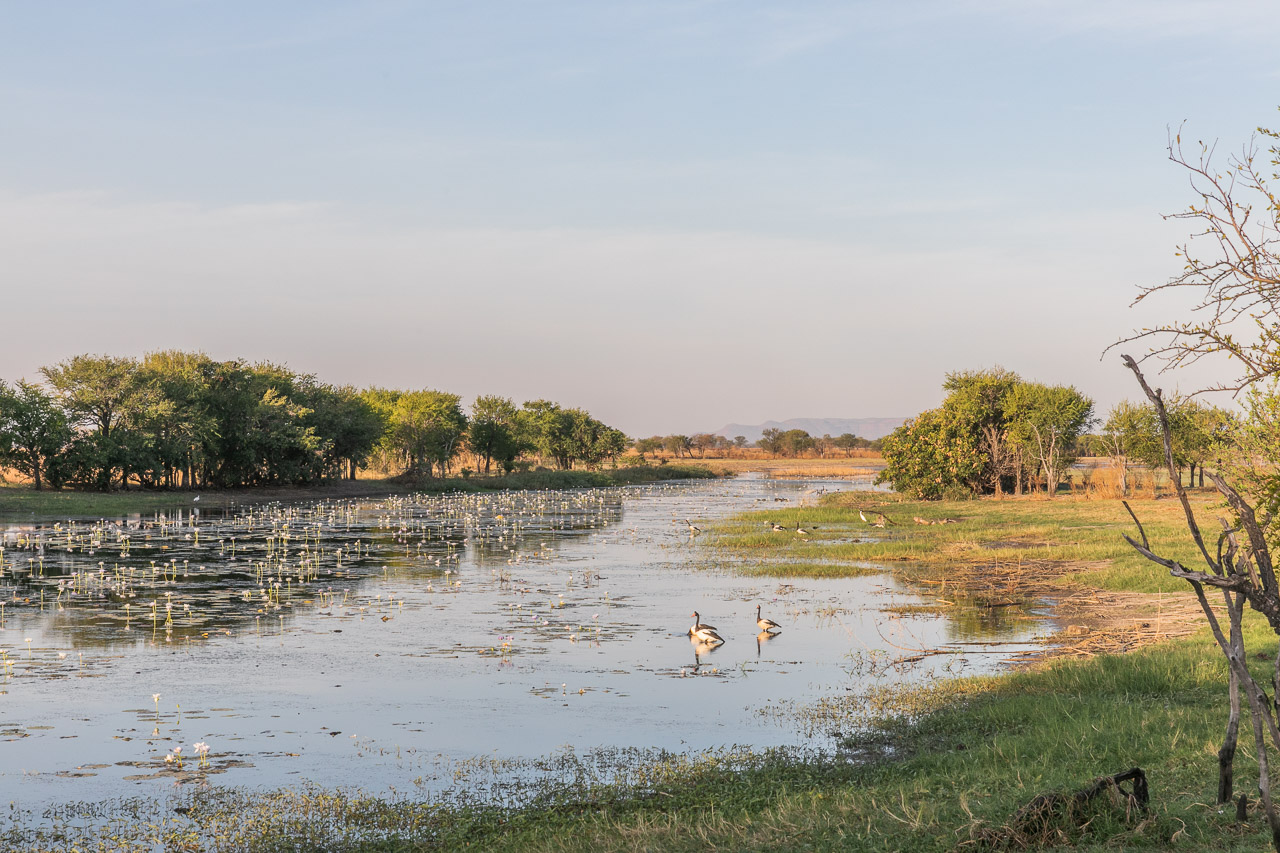 Plentiful bird life in the water at Marlgu Billabong in the Kimberley