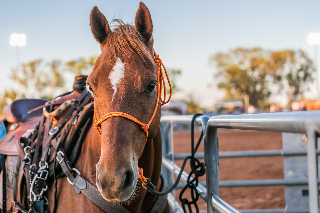 Horse at the Broome Rodeo