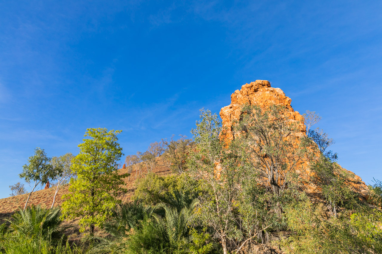 Palm Spring is a beautiful camping spot south of Halls Creek