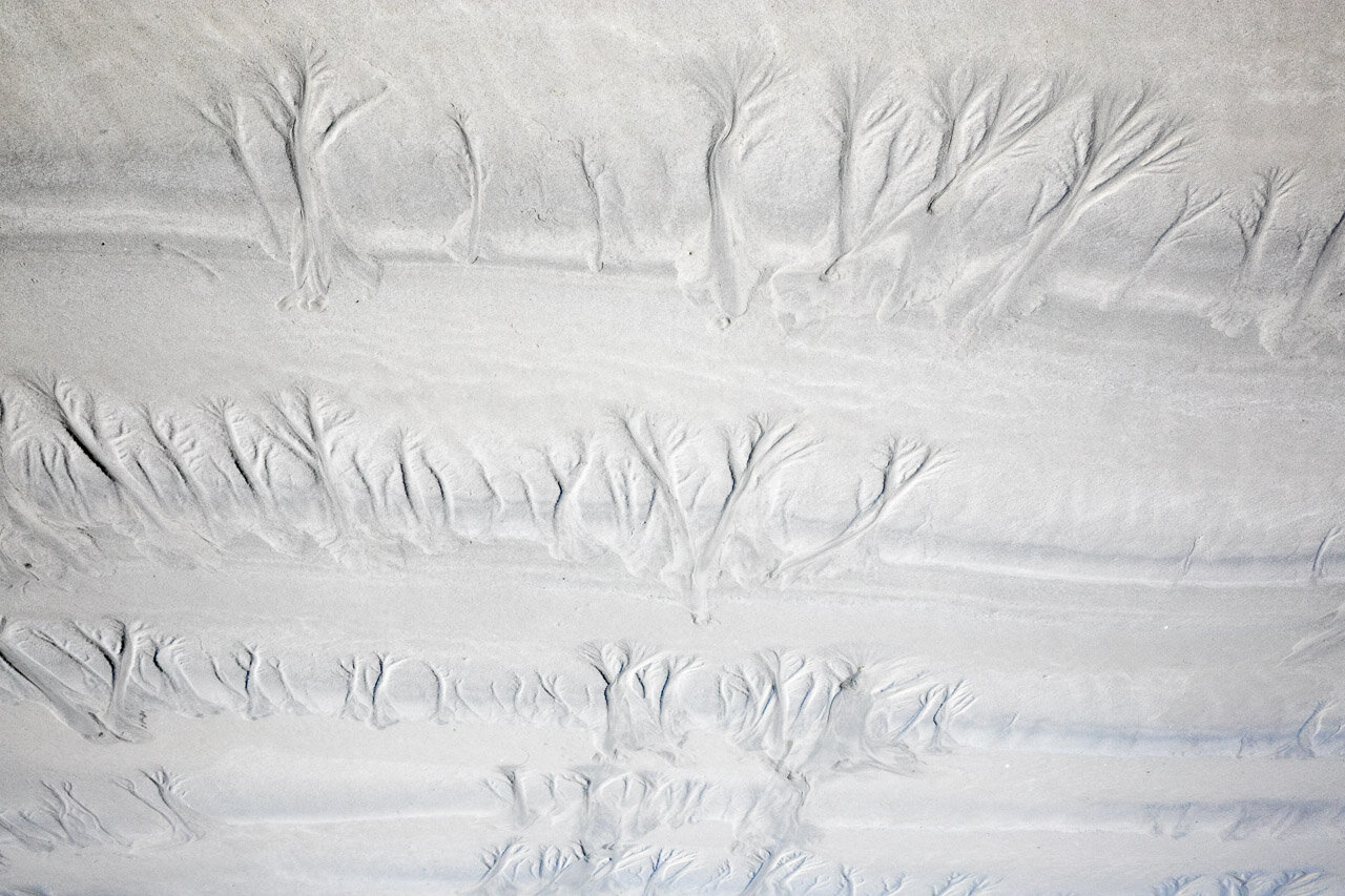 Forest patterns created by the outgoing tide at Cable Beach in Broome, Western Australia