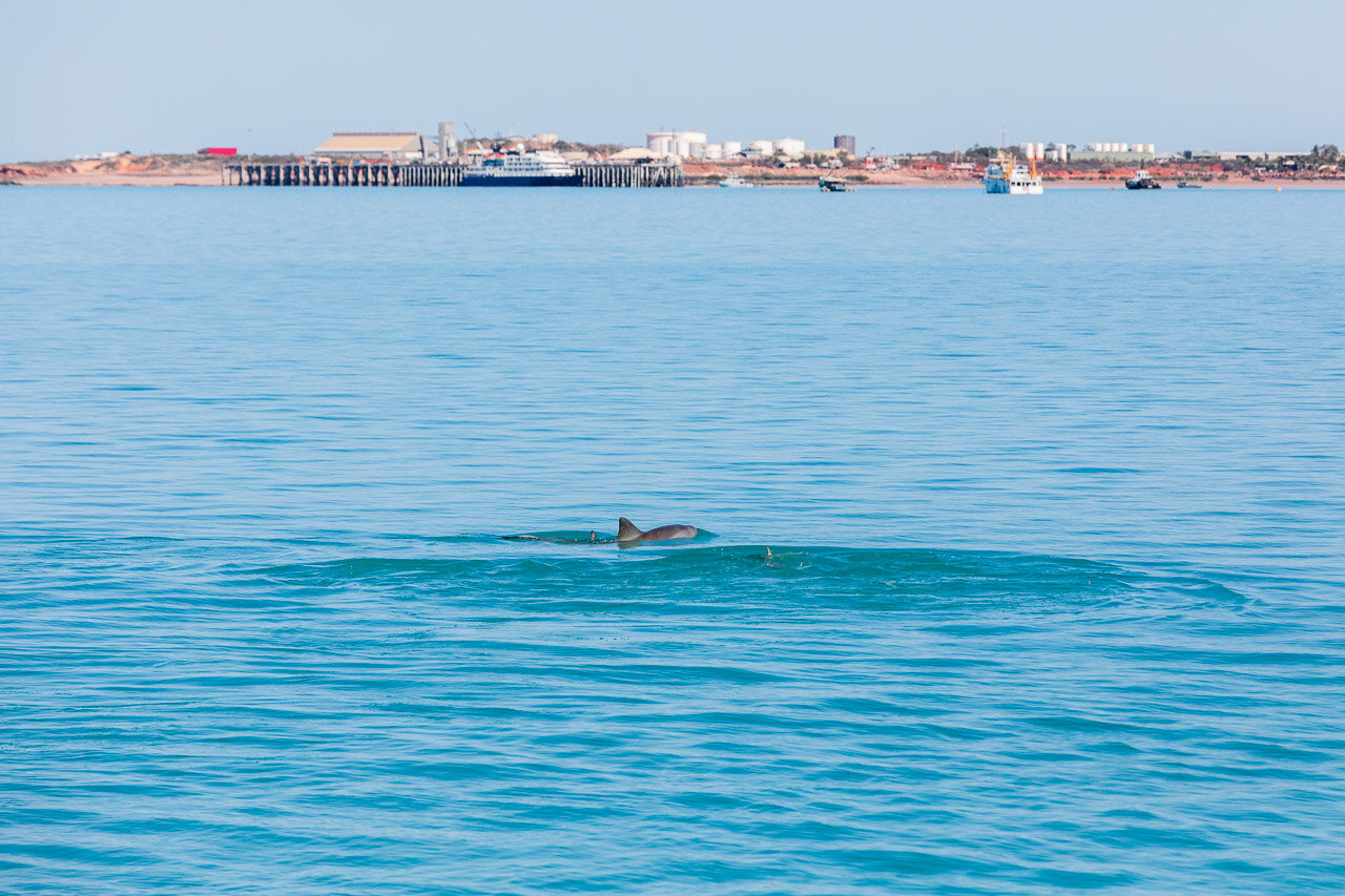 Broome Port is the backdrop for the dolphins in Roebuck Bay