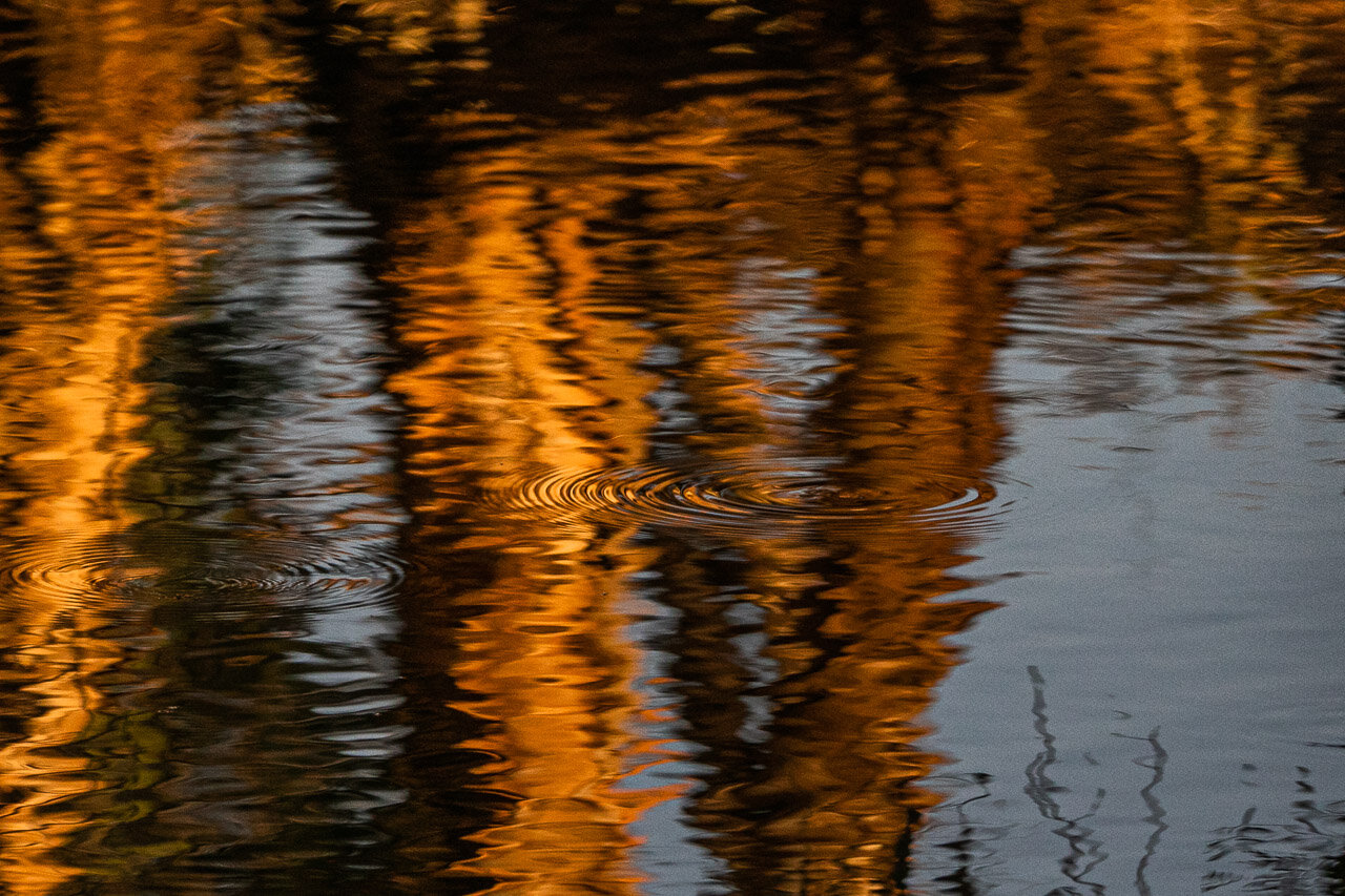 Reflections of tree trunks and sky in a billabong