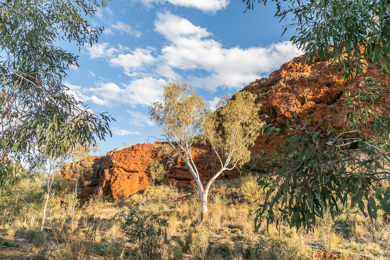A typical scene in Western Australia's Pilbara region with red cliffs and gum trees