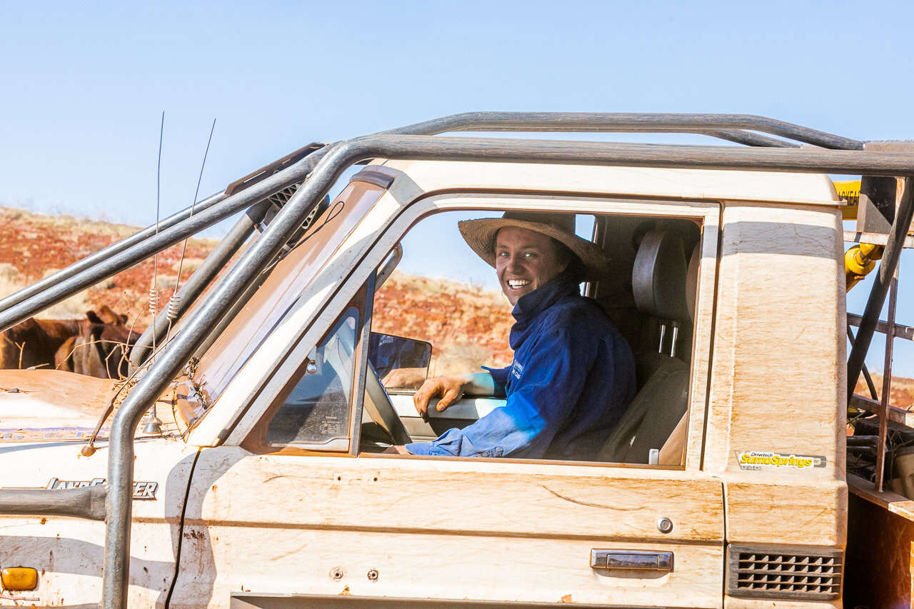 A stationhand or jackaroo in his work ute, rounding up cattle at mustering time in the Pilbara