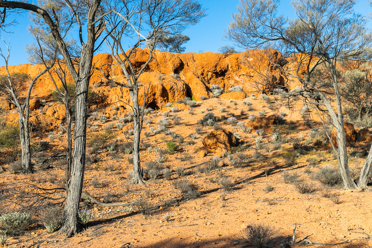 Breakaways and native fauna at Nallan Station in Western Australia